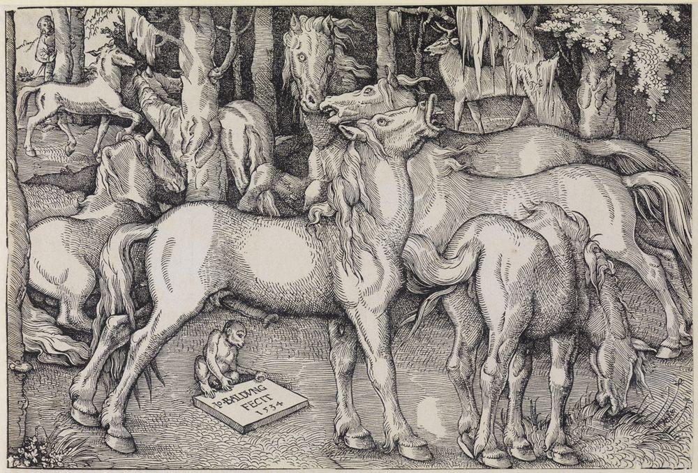 Gruppe von sieben wilden Pferden