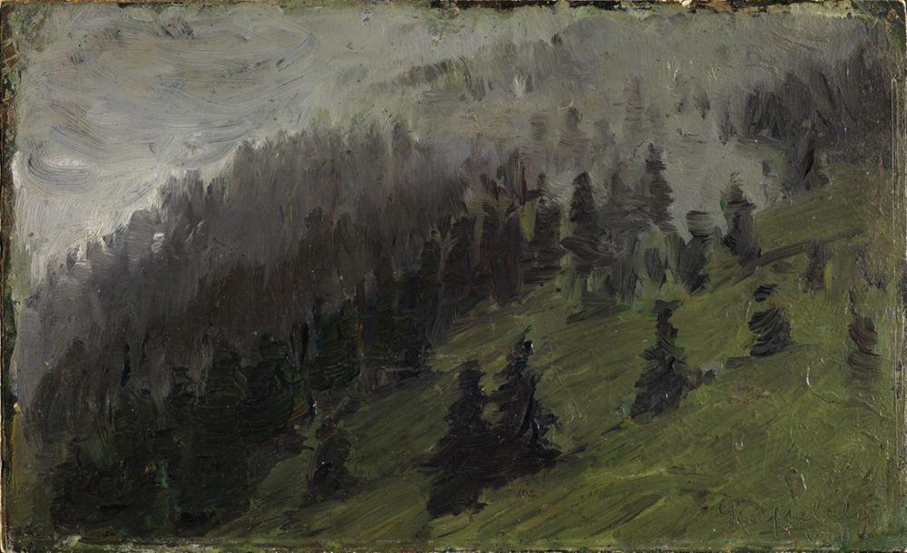Nebel zwischen Tannen