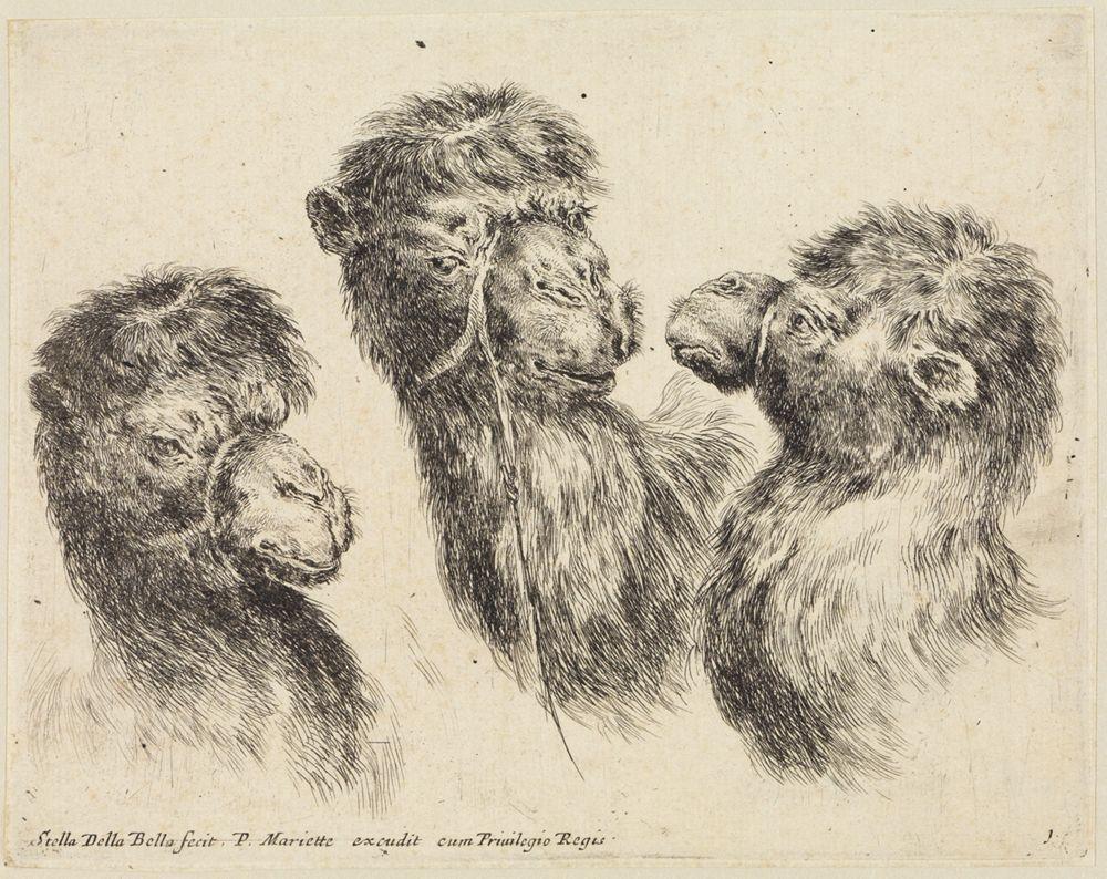 Verschiedene Tierköpfe (Têtes de différents animaux): Drei Kamelköpfe