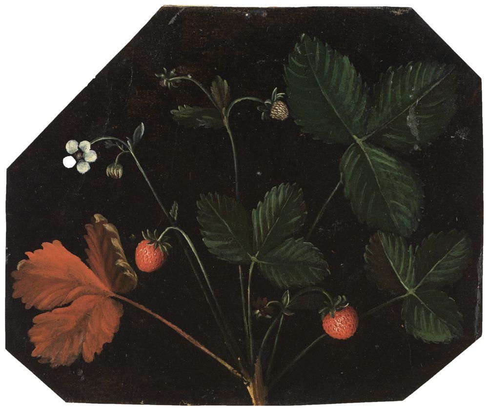 Erdbeerstaude mit Blüte und Früchten