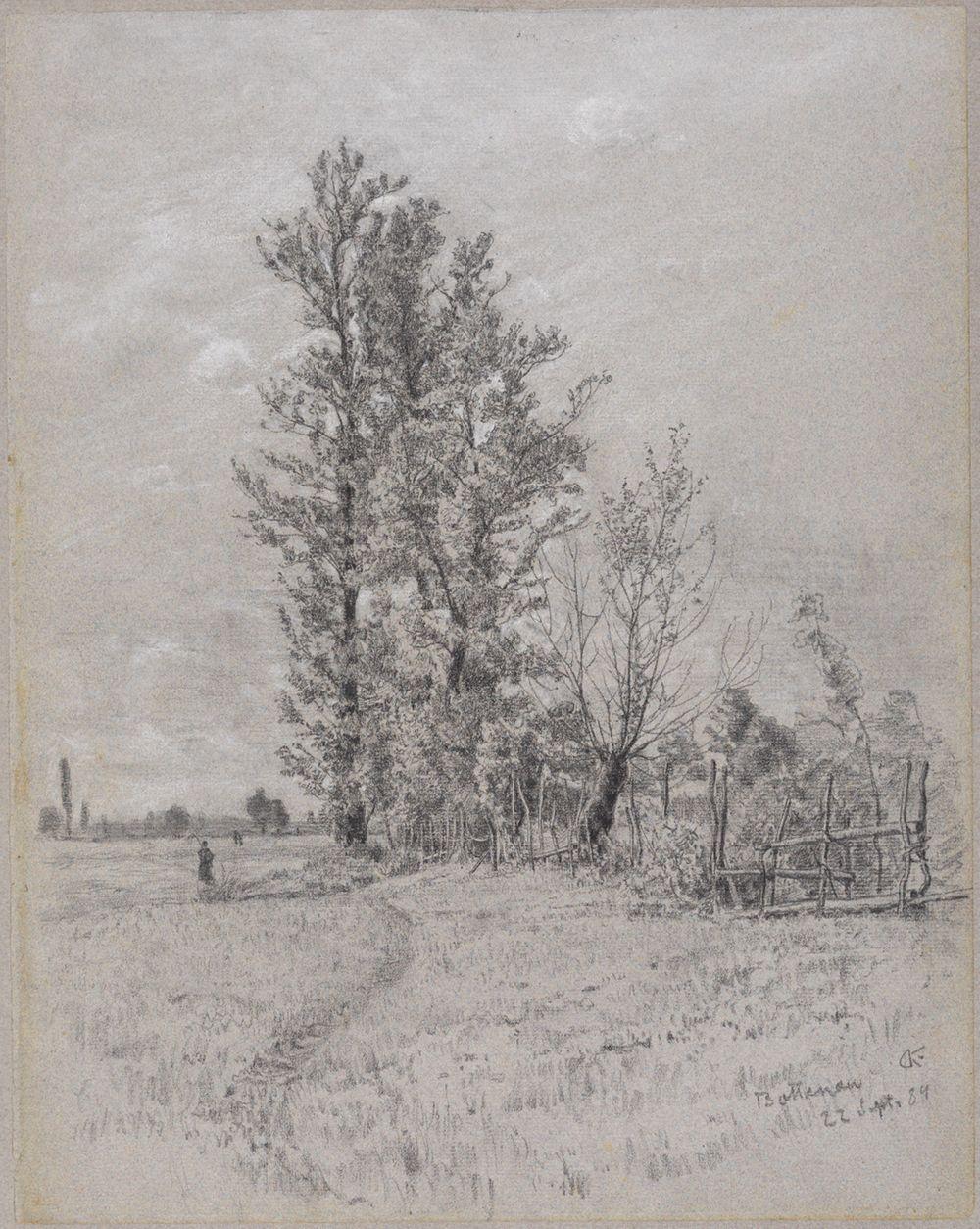 Erlen und Weiden bei Bottenau