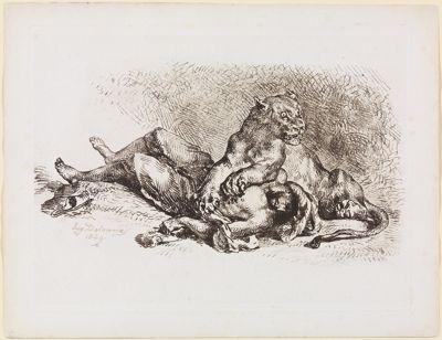 Löwin, die Brust eines Arabers zerreißend