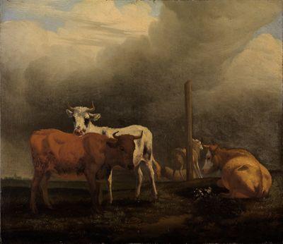 Rinder und Schafe auf Weide