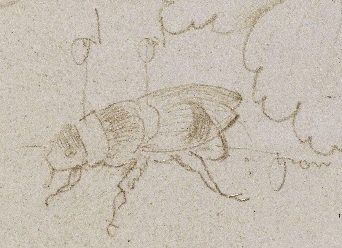 Abbildung einer Zeichnung aus dem Karlsruher Skizzenbuch des Renaissance-Künstlers Hans Baldung Grien aus den Jahren 1515-1545.