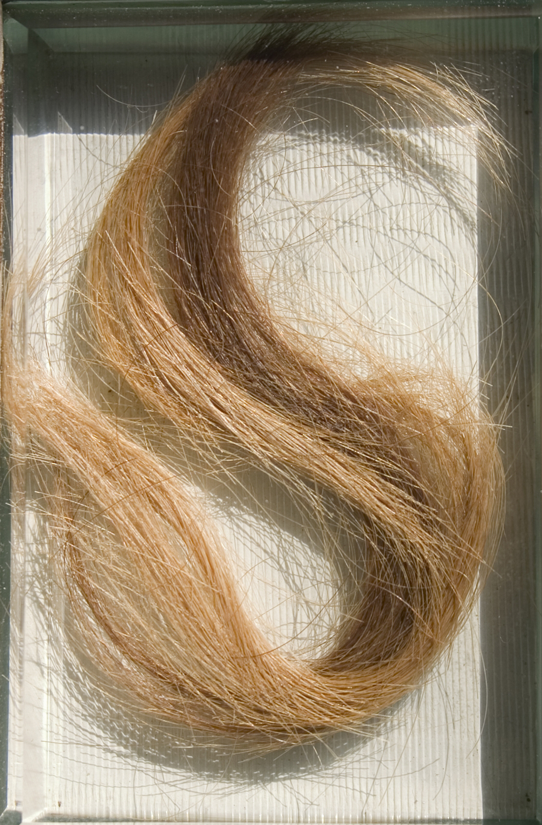 Image of Sebald Büheler: Dürer's lock of hair, 1559–1871 (mounting by Edward von Steinles, about 1871), borrowed from Gemäldegalerie der Akademie der Bildenden Künste Vienna.