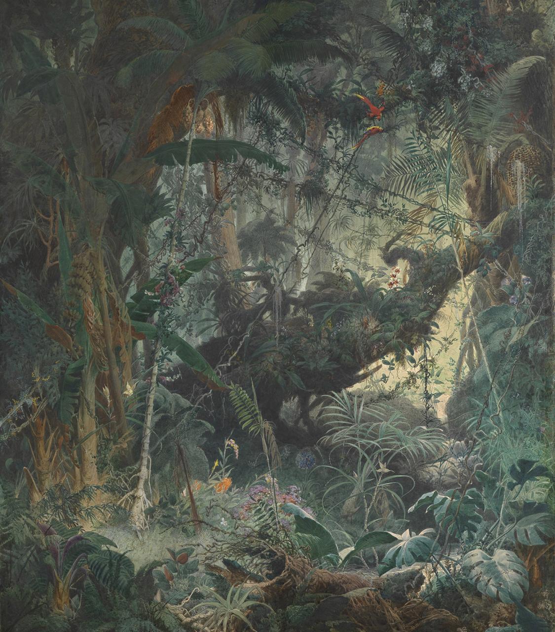 Adolf Schrödters Darstellung des brasilianischen Urwalds